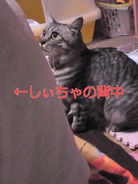 image_20130406225352.jpg