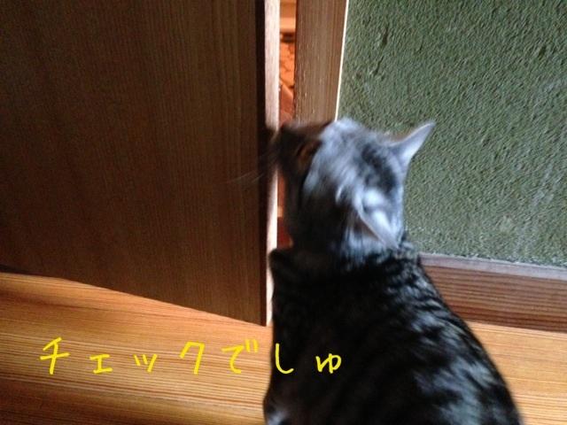image_20130420220441.jpg