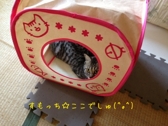 image_20130425222006.jpg