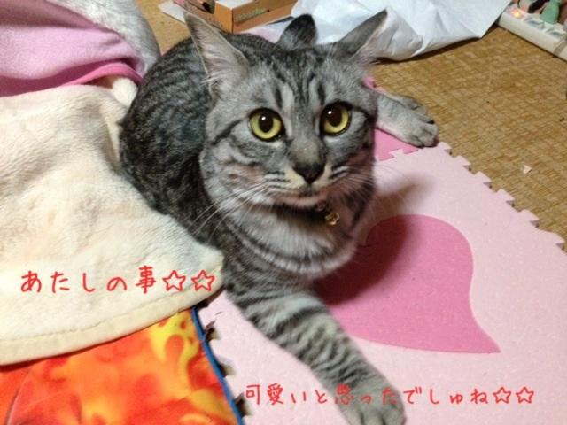 image_20130426222708.jpg