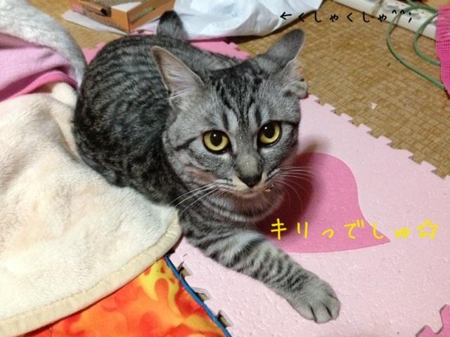 image_20130426222709.jpg