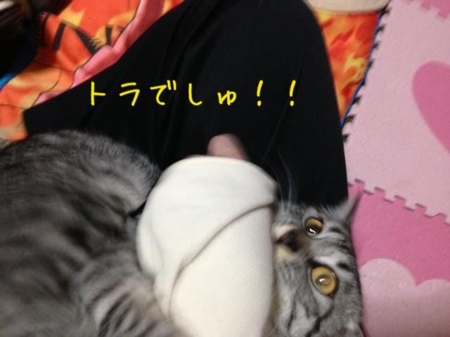image_20130427222510.jpg
