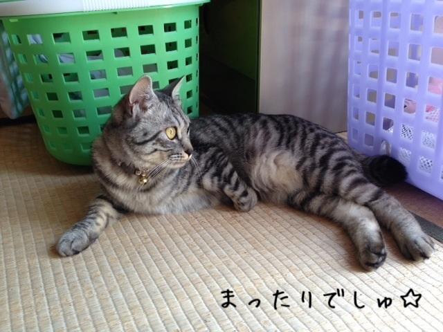 image_20130428213346.jpg