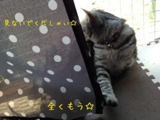 image_20130428213537.jpg