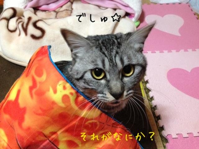 image_20130430222712.jpg