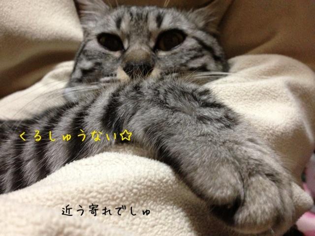 image_20130430222715.jpg