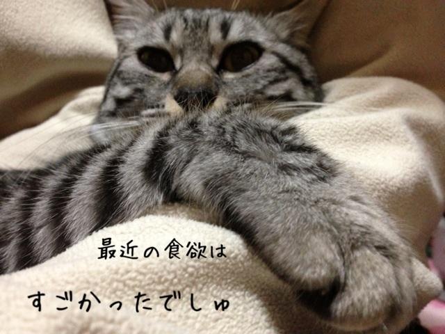 image_20130430224546.jpg