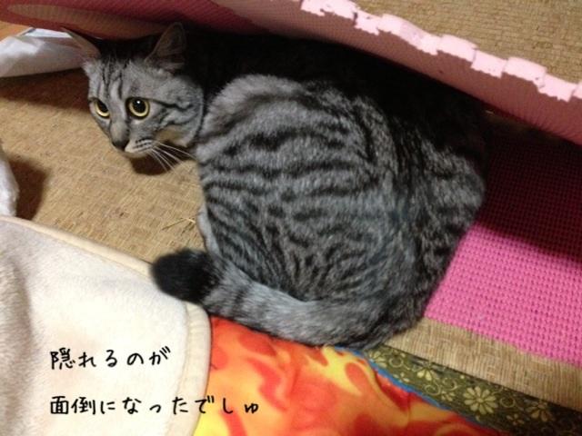 image_20130502221207.jpg