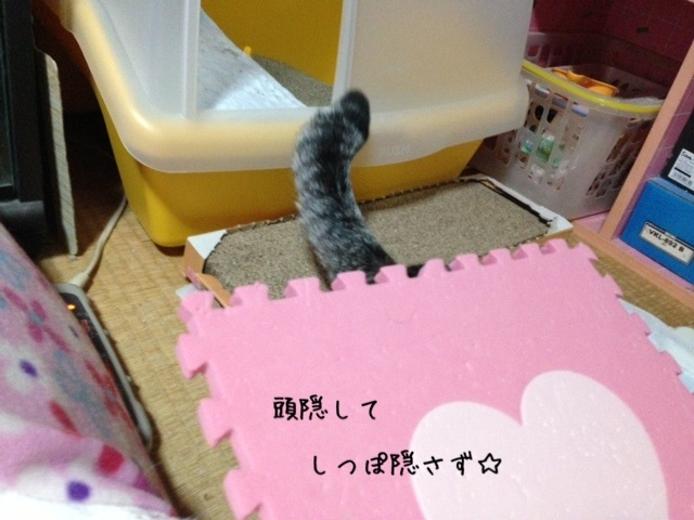 image_20130502221211.jpg