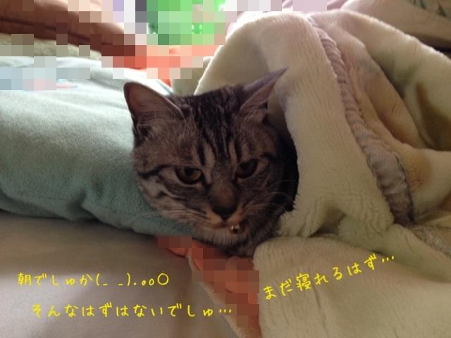 image_20130503224611.jpg