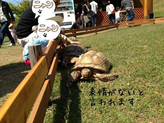 image_20130505231111.jpg