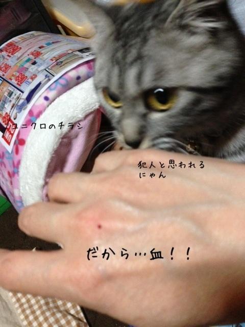 image_20130508224515.jpg