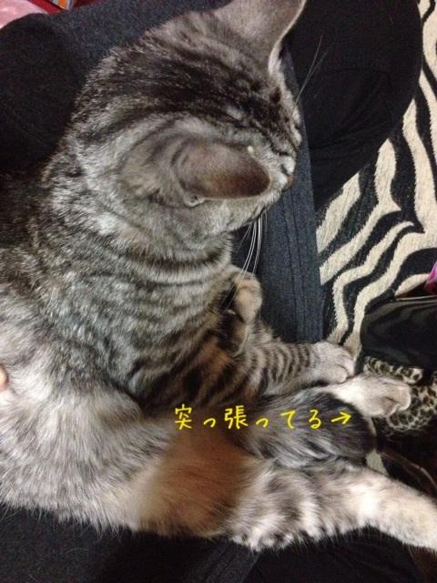 image_20130509221612.jpg