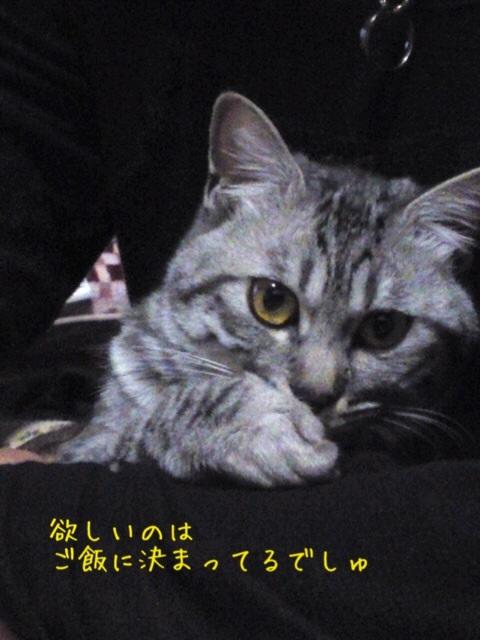 image_20130509224634.jpg