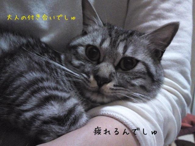 image_20130510231258.jpg