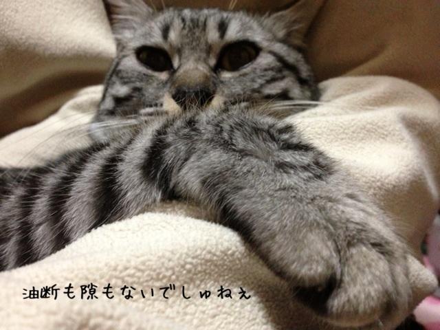 image_20130512003413.jpg