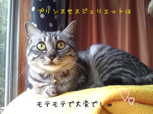 image_20130512220511.jpg