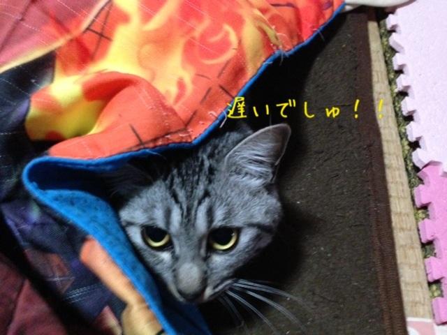 image_20130514221504.jpg
