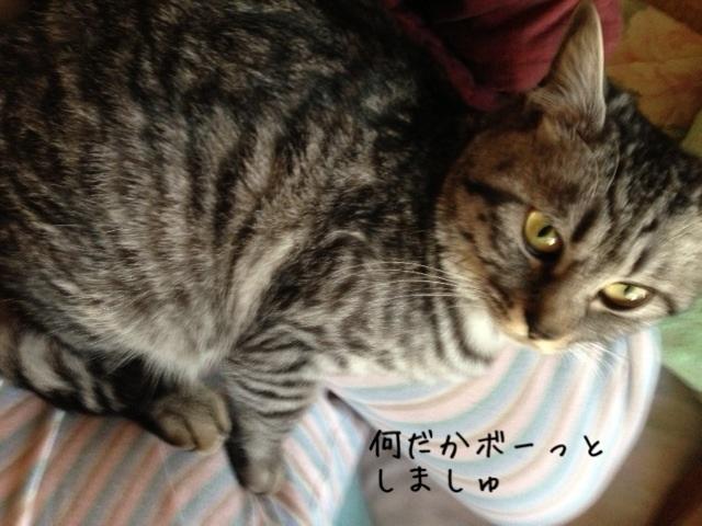 image_20130514221506.jpg