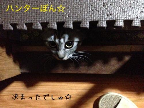 image_20130516223640.jpg