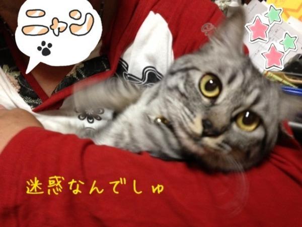 image_20130516230306.jpg