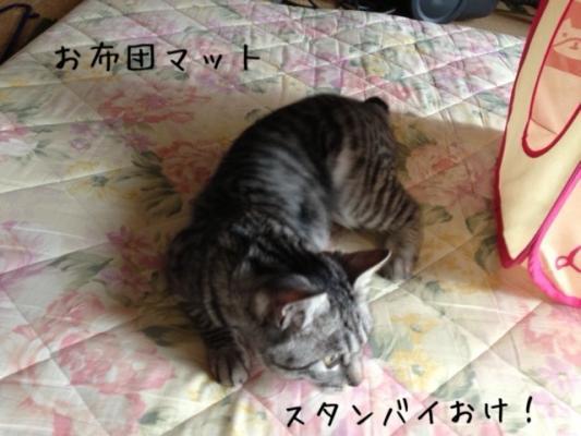 image_20130519180555.jpg