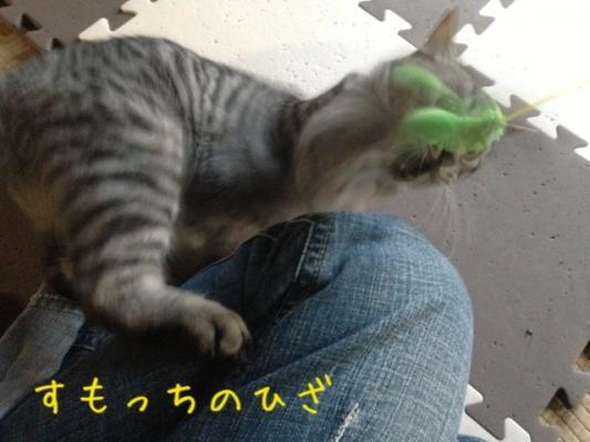 image_20130519180556.jpg