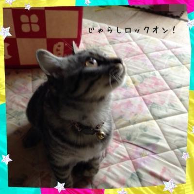 image_20130519182622.jpg