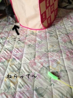 image_20130521223607.jpg
