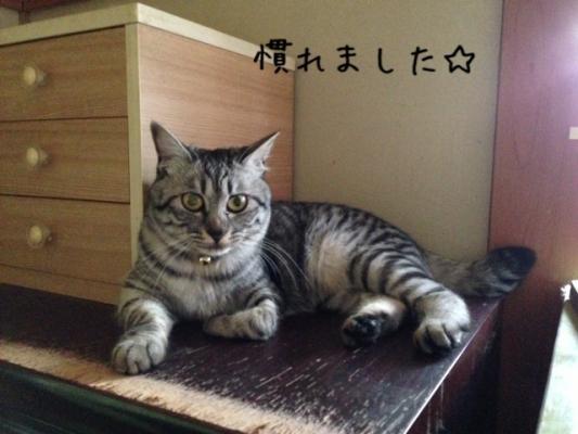 image_20130523221818.jpg