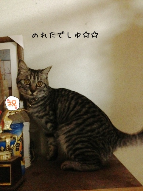 image_20130523221820.jpg