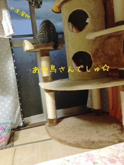 image_20130524233019.jpg