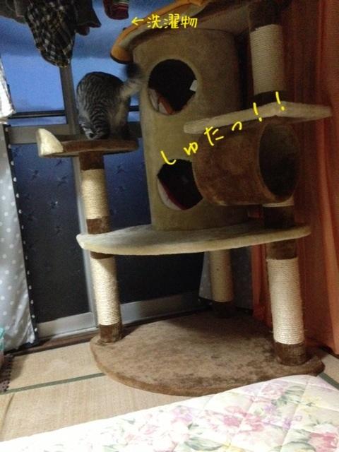 image_20130524233220.jpg