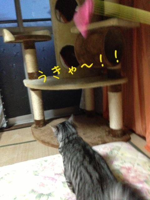 image_20130524233446.jpg
