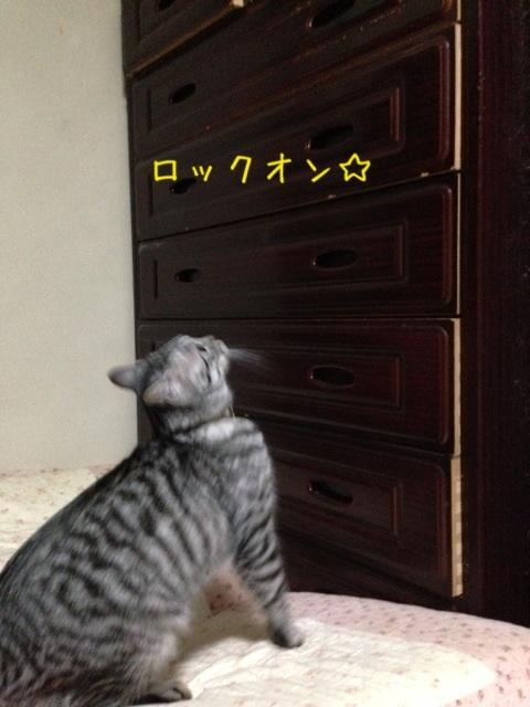image_20130529224256.jpg