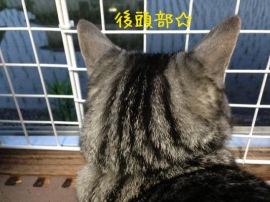 image_20130604221223.jpg