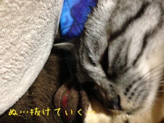 image_20130607214849.jpg