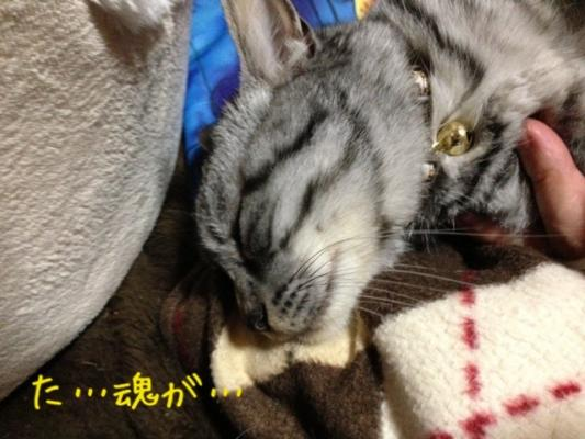 image_20130607214851.jpg
