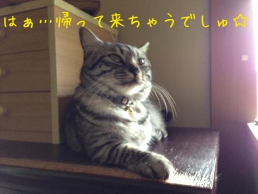 image_20130612221444.jpg