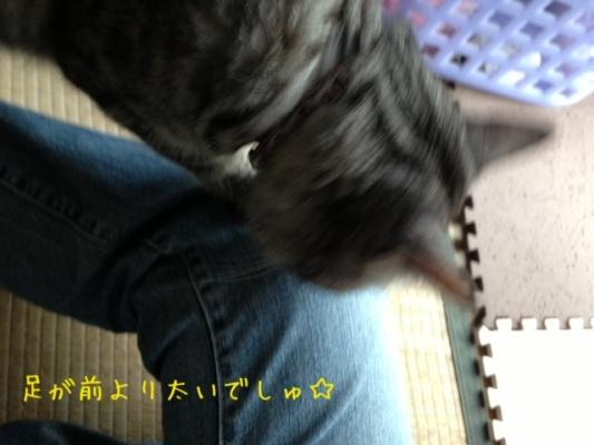 image_20130616224411.jpg