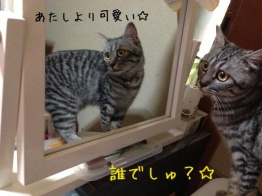 image_20130630215420.jpg
