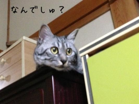 image_20130703223226.jpg