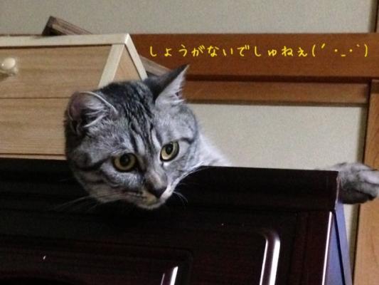 image_20130703223452.jpg