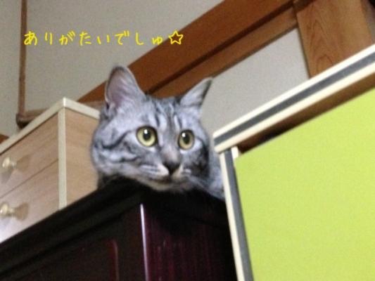 image_20130704231406.jpg