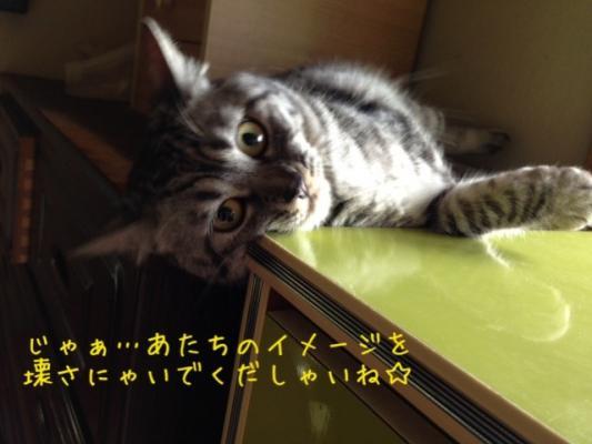 image_20130707213707.jpg