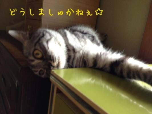 image_20130707213754.jpg