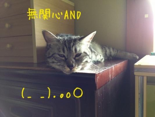 image_20130708221126.jpg