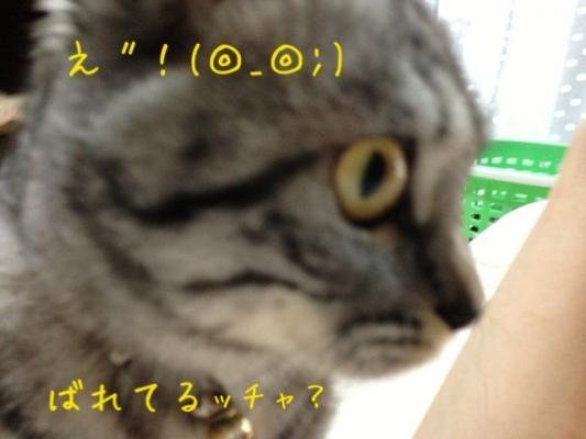 image_20130709222806.jpg