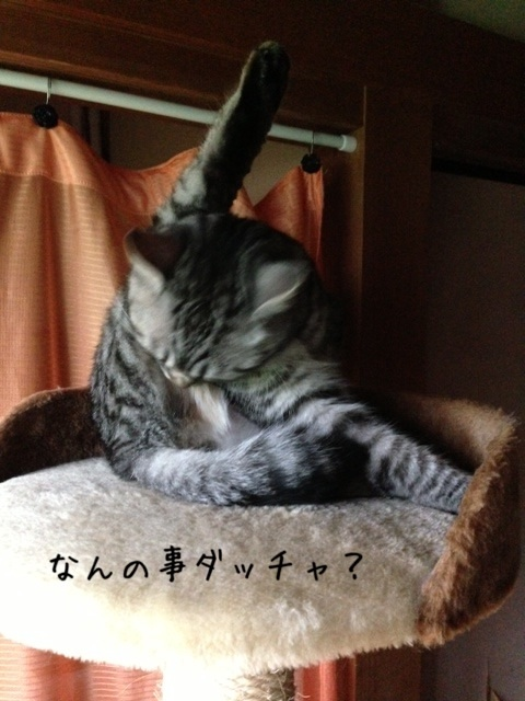 image_20130709222807.jpg