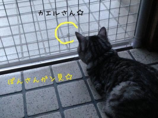 image_20130710231229.jpg